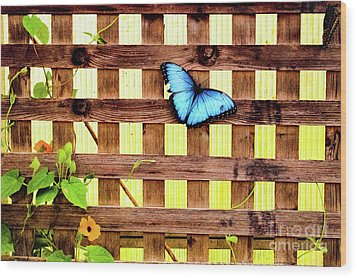 Garden Fence Wood Print