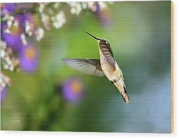 Garden Hummingbird Wood Print by Christina Rollo