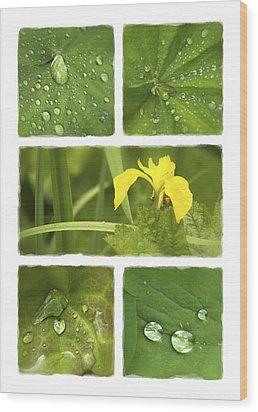 Garden Jewels II Wood Print