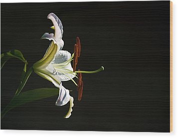 Garden Lily Wood Print