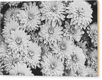 Garden Mums Wood Print by Ryan Kelly