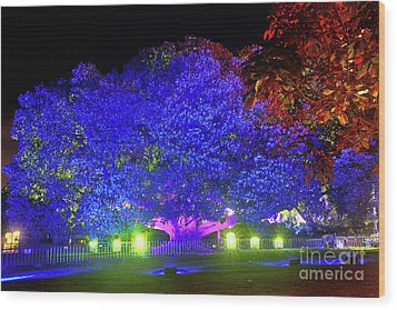 Wood Print featuring the photograph Garden Of Light By Kaye Menner by Kaye Menner