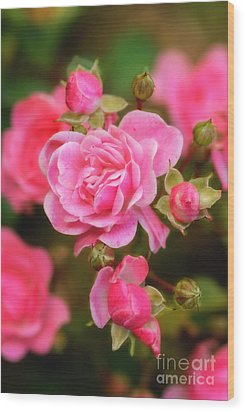 Wood Print featuring the photograph Garden Rose by Alana Ranney