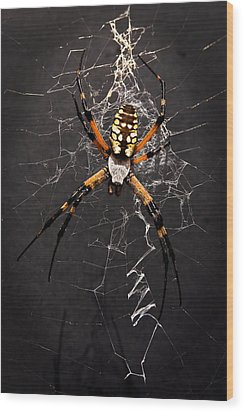 Garden Spider And Web Wood Print by Tamyra Ayles
