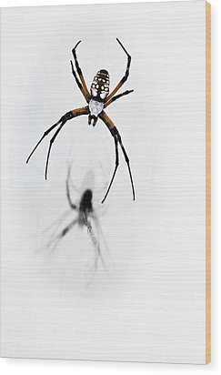 Garden Spider With Shadow Wood Print by Tamyra Ayles