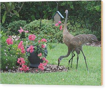 Garden Visitors Wood Print by Carol Groenen