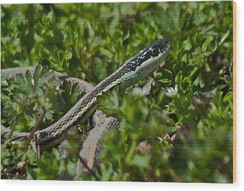 Garter Snake Wood Print by Douglas Barnett