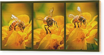 Gathering Pollen Triptych Wood Print by Bob Orsillo