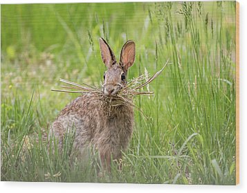 Gathering Rabbit Wood Print by Terry DeLuco