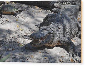 Wood Print featuring the photograph Gator Bait by John Black