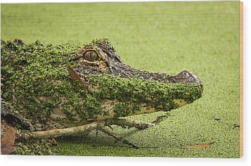 Gator Camo Wood Print