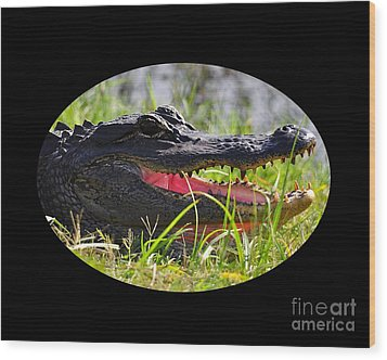 Wood Print featuring the photograph Gator Grin .png by Al Powell Photography USA