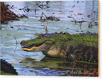 Wood Print featuring the photograph Gator Growl by Barbara Bowen