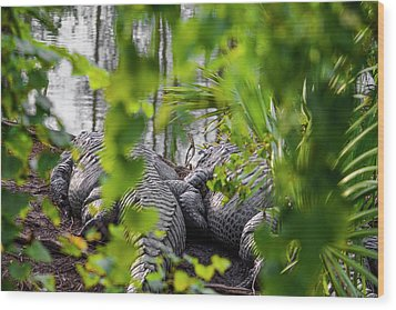 Gator Love Wood Print by Josy Cue