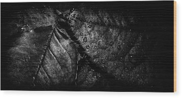 Gator Wood Print by Matti Ollikainen