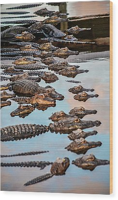 Gator Pack Wood Print by Josy Cue