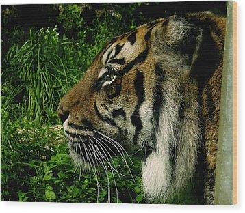 Gaze Of The Tiger Wood Print by Edan Chapman