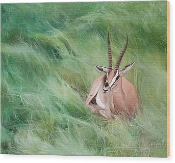 Gazelle In The Grass Wood Print