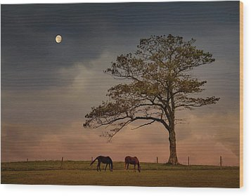 Gazing Peacefully Wood Print by Nancy Rose