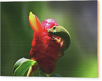 Wood Print featuring the photograph Gecko #1 by Anthony Jones