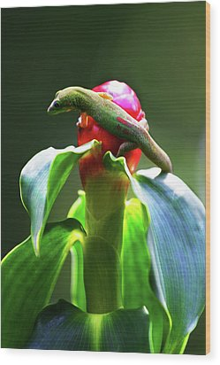 Wood Print featuring the photograph Gecko #3 by Anthony Jones