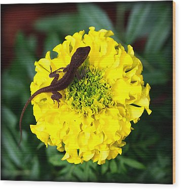 Gecko And Marigold Wood Print