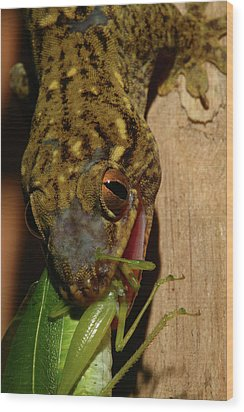 Gecko Feed Wood Print