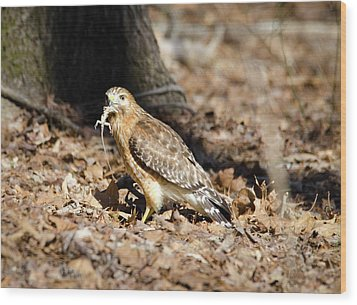 Gecko For Lunch Wood Print by George Randy Bass