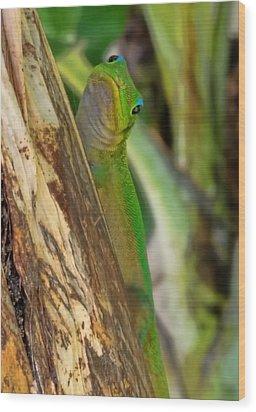 Gecko Up Close Wood Print