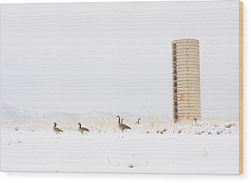 Geese In The Snow With Silo Wood Print by James BO  Insogna