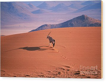 Gemsbok Wood Print by Eric Hosking and Photo Researchers