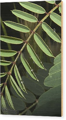 Wood Print featuring the photograph Gentle Morning Dew by Karen Musick