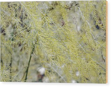 Wood Print featuring the photograph Gentle Weeds by Deborah  Crew-Johnson