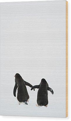 Gentoo Penguin (pygoscelis Papua) Wood Print