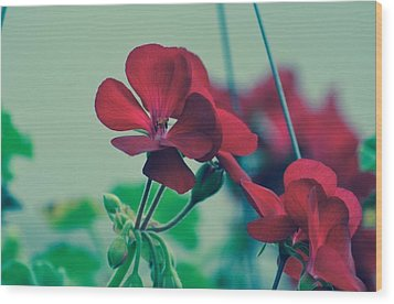 Wood Print featuring the photograph Geraniums by Penni D'Aulerio