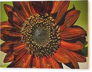 Gerber Daisy Full On Wood Print