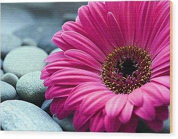 Gerber Daisy In Pebbles Wood Print by Helen Stapleton