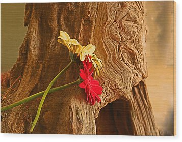 Gerber Daisy On Driftwod Wood Print by Ronald Olivier