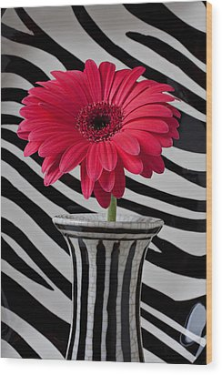 Gerbera Daisy In Striped Vase Wood Print by Garry Gay
