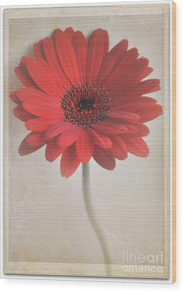 Wood Print featuring the photograph Gerbera Daisy by Lyn Randle