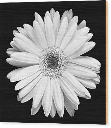 Single Gerbera Daisy Wood Print by Marilyn Hunt
