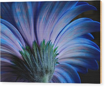 Wood Print featuring the photograph Gerbera by Marilynne Bull