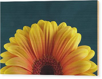 Gerbera Sunrise Wood Print by Michael Park