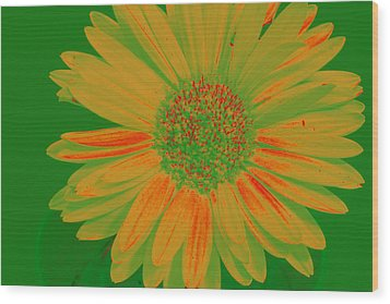 Wood Print featuring the photograph Gerbia Daisy Sabattier by Bill Barber