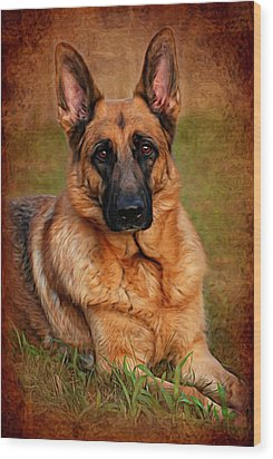 German Shepherd Dog Portrait  Wood Print