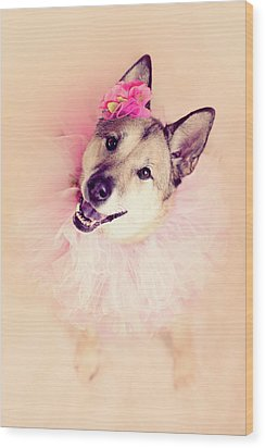 German Shepherd Mix Dog Dressed As Ballerina Wood Print by R. Nelson