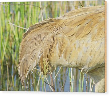 Wood Print featuring the photograph Get Some Tail by Lynda Dawson-Youngclaus