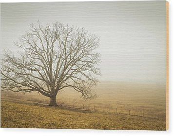 Tree In Fog - Blue Ridge Parkway Wood Print