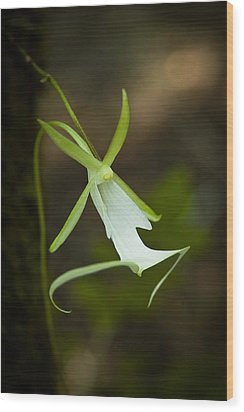 Ghost Orchid  Wood Print by Rich Leighton