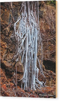 Ghostly Roots Wood Print by Christopher Holmes